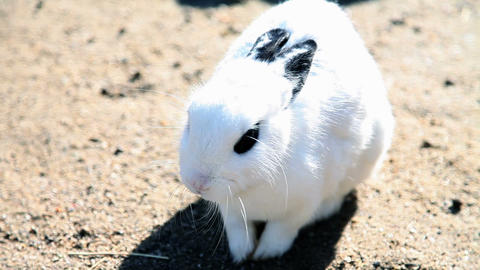 Big white rabit with dark eyes Footage