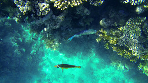 Corals and fishes in clean sea water Footage