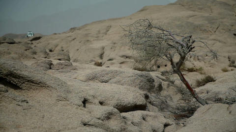 Close up of dried tree in rocky terrain Safari Footage