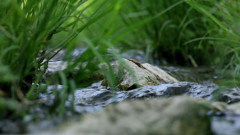 Low Angle Close Up Of Grass And Rocks In Water Str stock footage