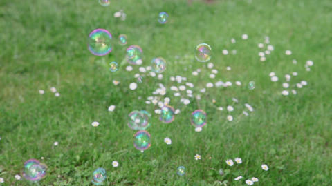 Soap bubbles on meadow Footage