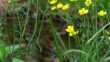 Flower In Forest Brook stock footage