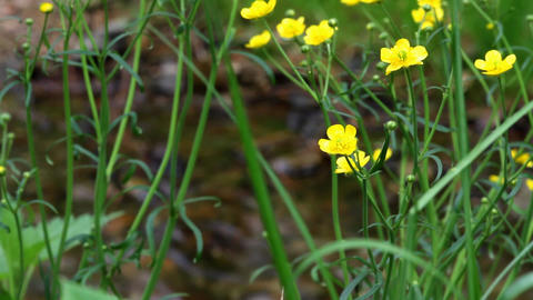 flower in Forest Brook Stock Video Footage