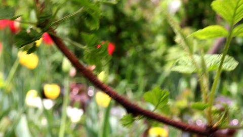 branch in the garden Stock Video Footage