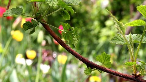 branch in the garden Footage