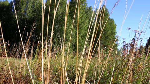 grass in the Meadow Stock Video Footage