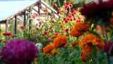 Flowers At Sunset stock footage