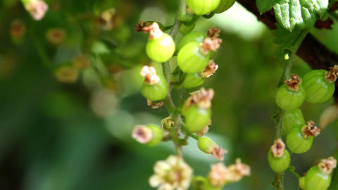 hive currant Stock Video Footage