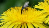 insect on flower Stock Video Footage