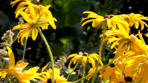 flowers in the garden Stock Video Footage