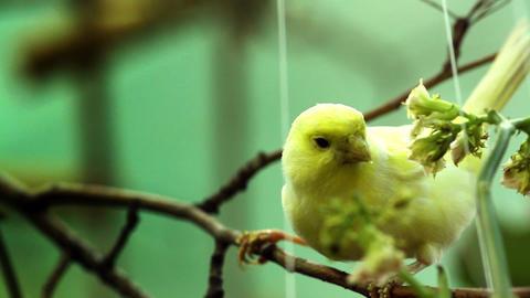 Bird on a tree Animation