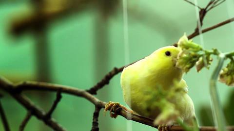 Bird on a tree Stock Video Footage