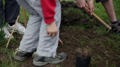 Kids gathering soil around fresh planted blueberry Footage