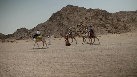 Shot of group of tourists riding a camel Footage