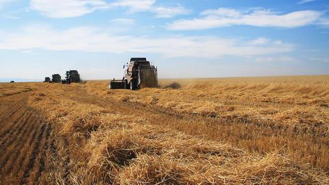 Wheat Field.Wheat Harvest Season stock footage