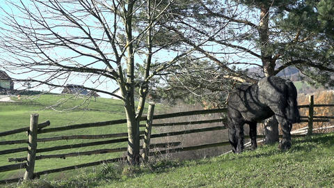 Horse stands under the tree next to the fence Footage