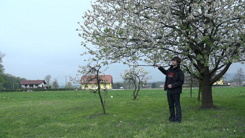Man standing below apple tree and shaking branches Footage