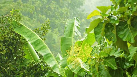 Rainy season in tropical climate Footage