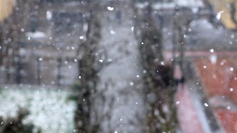 snowing in winter at park 2 Stock Video Footage