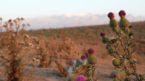 Prickly plant 10 Stock Video Footage