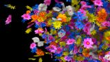 Flower Transition stock footage