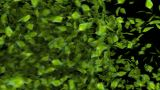 Green Leaf Transition stock footage
