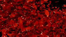 petal transition Stock Video Footage