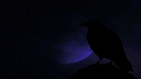 Crow 4 Stock Video Footage