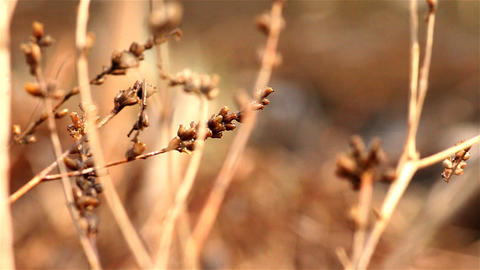 dry grass Stock Video Footage