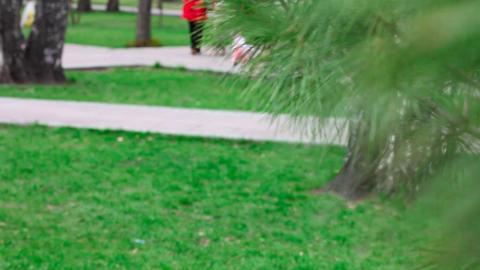 Spring park Stock Video Footage