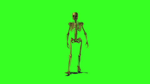 Skeleton 1 Stock Video Footage