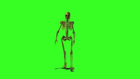 Skeleton 1 Animation