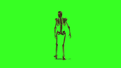 Skeleton 3 Animation