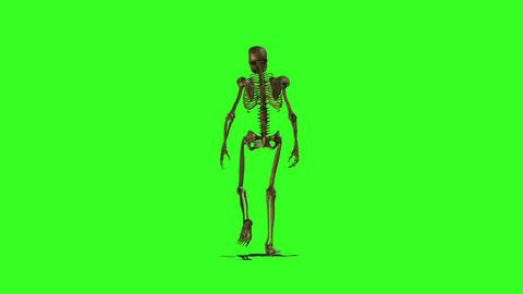 Skeleton 3 Stock Video Footage