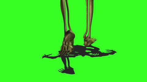 Skeleton 7 Stock Video Footage