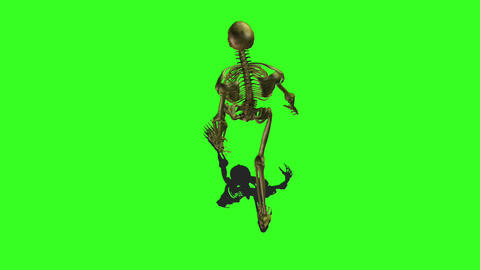 Skeleton 5 Animation