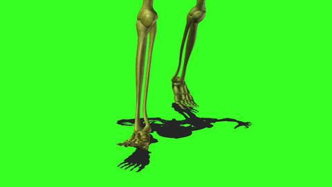 Skeleton 10 Stock Video Footage