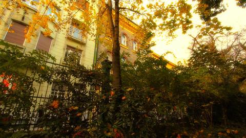 Fall 13 in Garden Footage