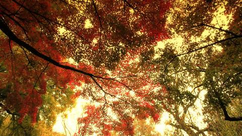 Autumn / Fall 0