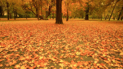 Fall ARTCOLORED 05 Stock Video Footage
