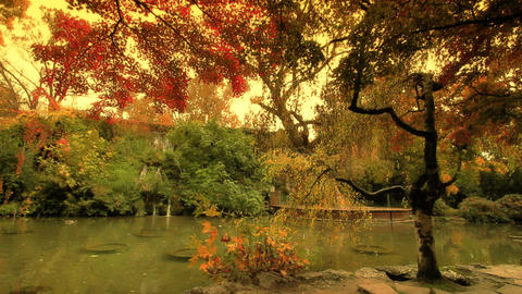 Japanese Garden Fall ARTCOLORED 01 Stock Video Footage