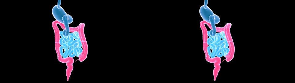 digestive xray sidebyside Animation