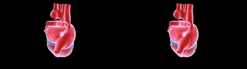 heart xray sidebyside Animation