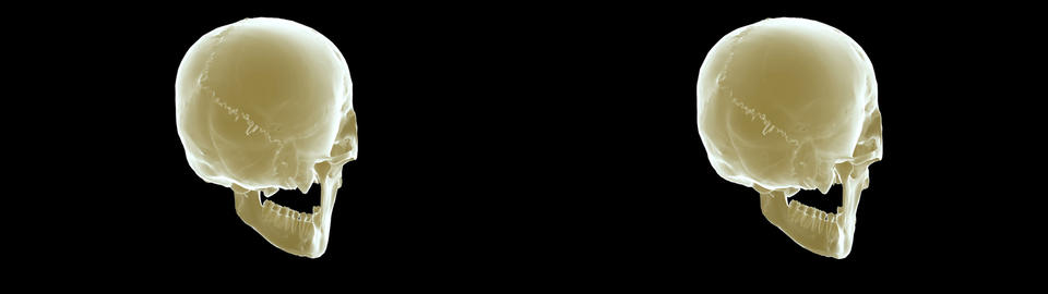 skull xray sidebyside Animation