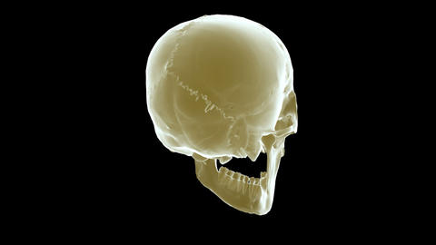 skull xray right Animation