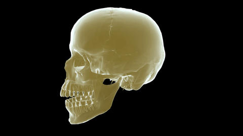 skull xray right Stock Video Footage