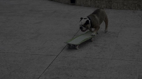 Dog riding skateboard Stock Video Footage