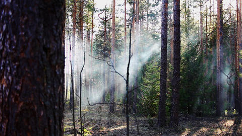 4313 forest smoke HD Stock Video Footage