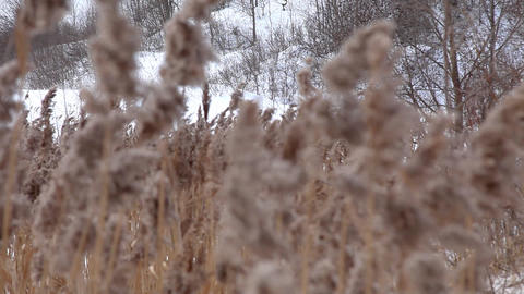Focus on winter grass Stock Video Footage