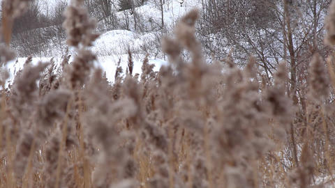 Focus on winter grass Footage